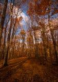 森林足迹晚秋天 库存图片