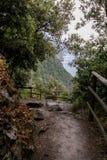 森林足迹有树木繁茂的小山的看法 免版税库存照片