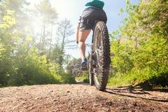 森林足迹的山骑自行车的人 库存照片