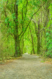 森林足迹的看法 库存照片