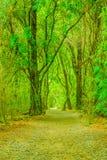 森林足迹的看法 免版税库存图片
