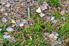 森林足迹的纹理 青苔、下落的针和叶子 免版税库存图片