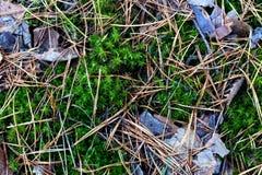 森林足迹的纹理 青苔、下落的针和叶子 库存照片