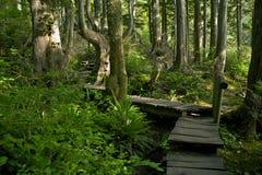 森林足迹 图库摄影
