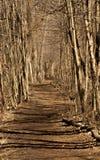 森林足迹 免版税库存图片