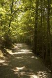 森林足迹 库存照片