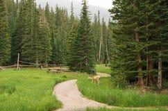 森林足迹 库存图片
