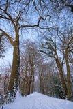 森林路多雪的冬天 免版税图库摄影