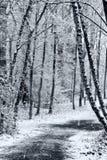 森林路径冬天 免版税库存图片