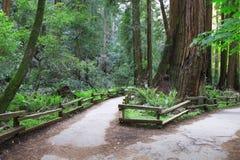 森林路径春天 库存照片
