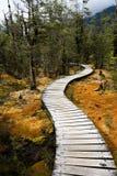 森林路径绕 免版税库存图片
