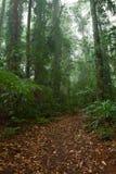森林路径雨豆树 免版税库存图片