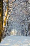 森林路径雪冬天 免版税图库摄影