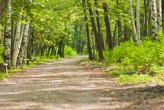 森林路径 库存照片
