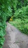 森林路径 免版税图库摄影
