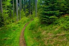 森林路径 免版税库存图片