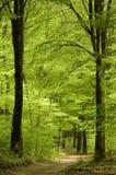 森林路春天 库存图片