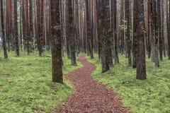 森林路 库存图片