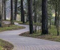 森林路 免版税图库摄影