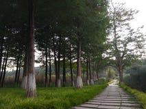 森林车道 库存照片