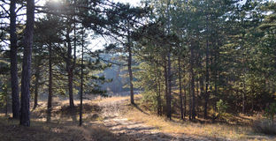 森林轨道 库存图片