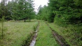 森林轨道 免版税库存照片