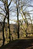 森林边界  免版税库存照片
