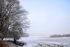 森林边缘和灌木与去年秋天叶子和霜在b 图库摄影