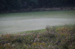 森林边缘的早晨草甸 免版税库存图片