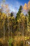 森林边缘 免版税库存照片