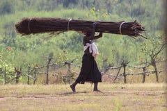 森林运用 免版税库存照片