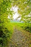 森林运输路线运行中 免版税库存图片