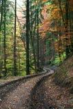 森林运输路线 免版税库存图片