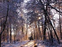 森林透视 库存照片
