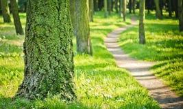 森林道路。 库存图片