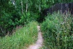 森林道路向伏尔加河的银行 夏天 巨大 伏尔加河 俄国横向 库存照片