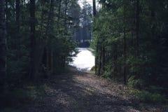 森林道路向湖 免版税图库摄影