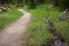 森林道路和小小河在洛矶山国家公园 图库摄影