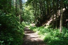 森林道路在一个晴朗的早晨 免版税库存照片