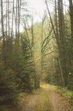 森林道路在与大橡木的秋天在背景,立陶宛中 库存图片