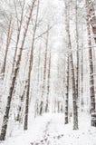 森林道路在冬天 免版税图库摄影