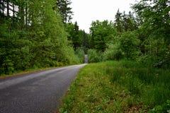 森林道路在南波希米亚 免版税库存照片