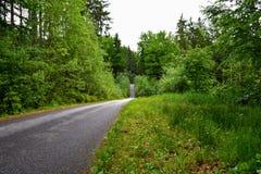 森林道路在南波希米亚 免版税图库摄影
