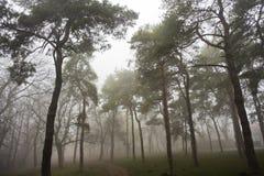森林道路在有雾的秋天早晨, Kosutnjak森林,贝尔格莱德 免版税库存照片
