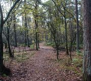森林道路在秋天,国家公园veluwe在荷兰 免版税库存图片