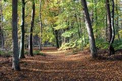 森林道路在秋天,国家公园veluwe在荷兰 免版税图库摄影