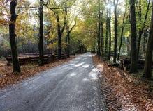 森林道路在秋天,国家公园veluwe在荷兰 库存照片