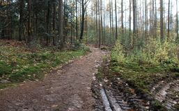 森林道路在秋天,国家公园veluwe在荷兰 库存图片