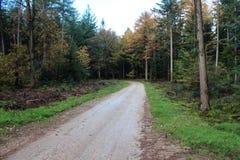 森林道路在秋天,国家公园veluwe在荷兰 免版税库存照片