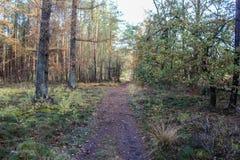 森林道路在秋天,国家公园veluwe在荷兰 图库摄影